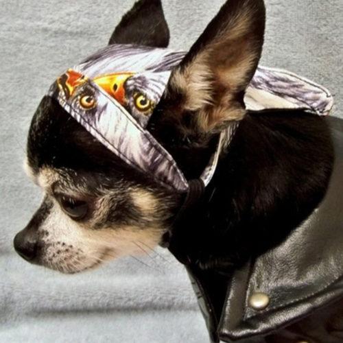 Rock Star Puppy Pañoleta Aguila