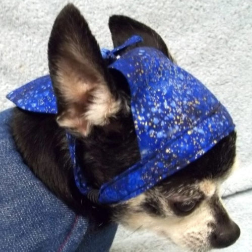 Rock Star Puppy Pañoleta Galaxia
