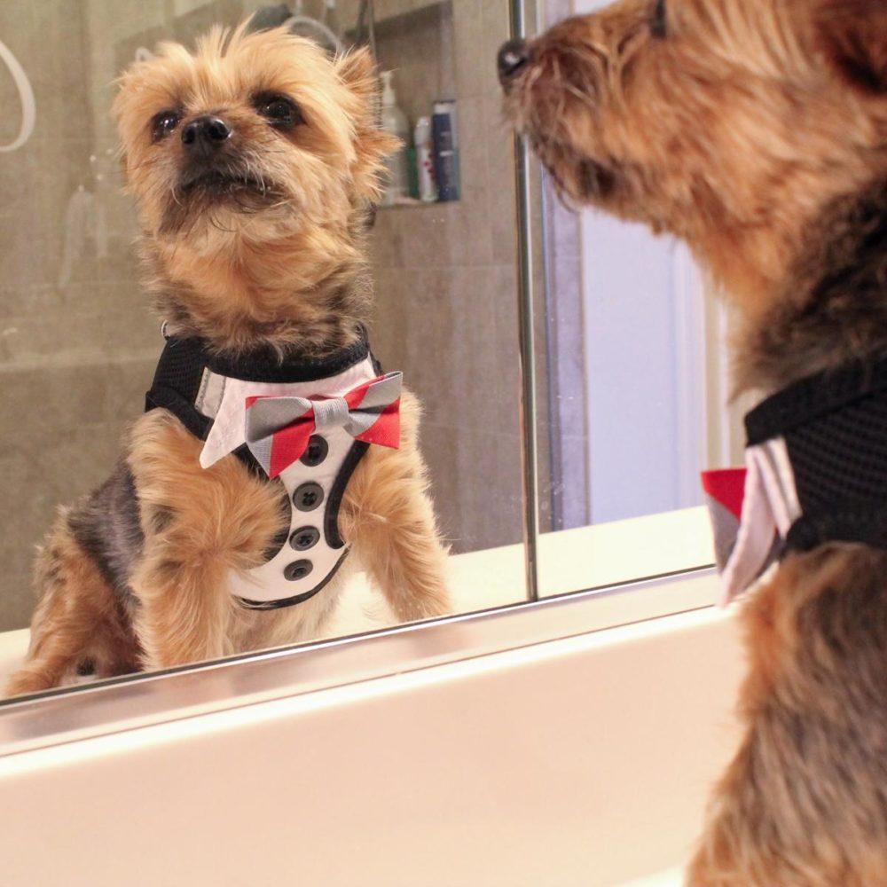 Doggie Design Arnes American River Tuxedo