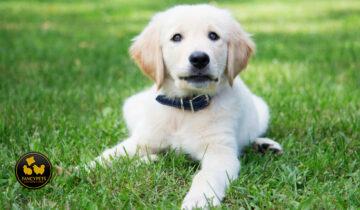 Cómo elegir el collar adecuado para su perro