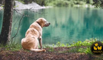 ¿Cuál es la edad de su perro en años humanos? ¡la nueva ecuación puede sorprenderte!