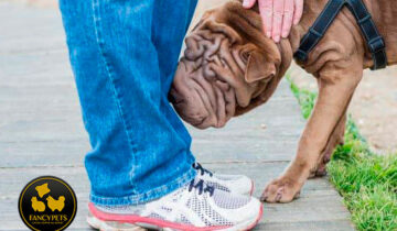 ¿Pueden los perros detectar el cáncer?