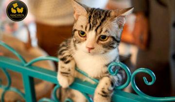 Señales de ansiedad por separación en los gatos y cómo se puede ayudar