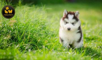 Cómo lidiar con su Cachorro en Crecimiento