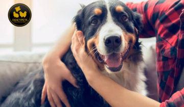 5 consejos inteligentes para practicar el autocuidado con su perro