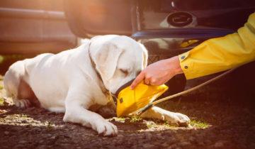Tu Perro y el Calor del Verano
