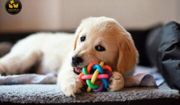 ¿Qué juguetes prefieren los perros?