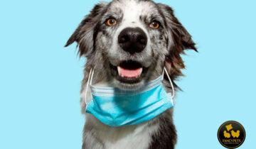 Lo que debe saber sobre el COVID-19 y las mascotas